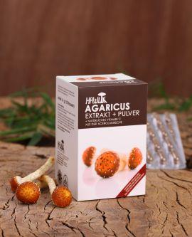 Agaricus (ABM) Extrakt+Pulver